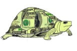 slow money turtle