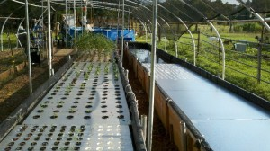 Sea Lavender Farm Aquaponics Project